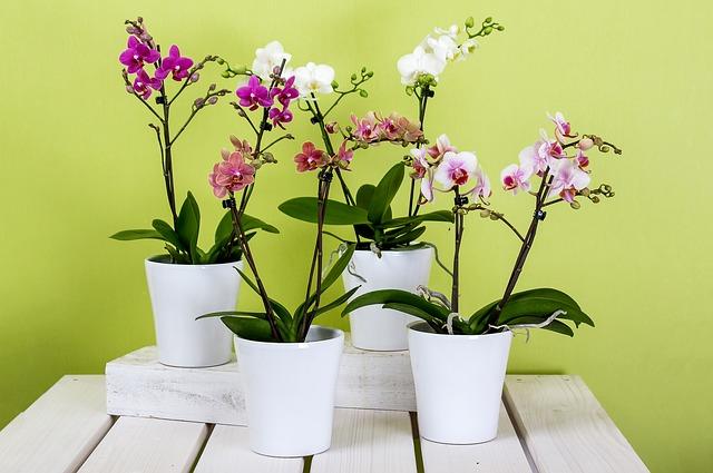 bílé květináče